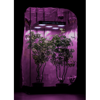 Zestaw do uprawy growbox DM120 + Luckygrow 550 dual