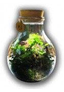 Forest in a bottle, natural decorations